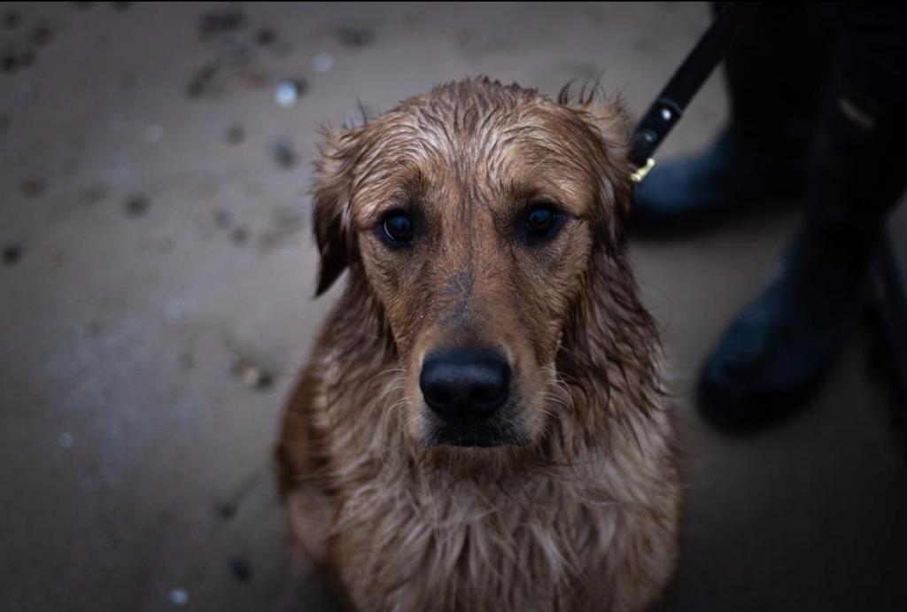 Frinton-on-sea dog walks